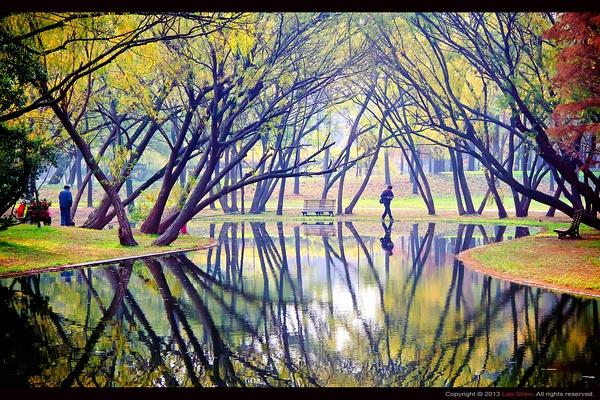 2013 魔性森林 拍摄技巧